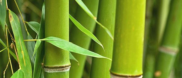 Ресторан «Бамбук» азиатской и итальянской кухни
